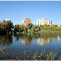 Городской пруд в октябре... :: Тамара (st.tamara)