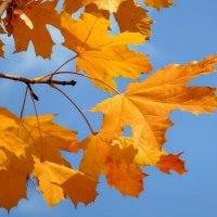 Осень, осень, ну давай у листьев спросим... :: *MIRA* **