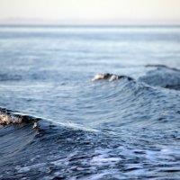 Белое море :: Лидия Вихарева