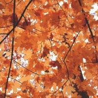 Осень скрывает листьями ваши секреты и недосказаные слова.. :: Наталья Солженикина