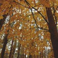 Безумно красивая осень,те такая как обычно, атмосферная :: Наталья Солженикина