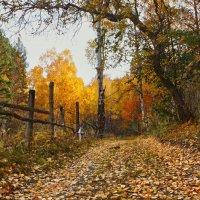 Осень :: Ольга Литвинцева
