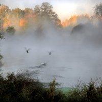 Осенний этюд с дикими утками... :: Андрей Войцехов