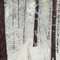 Заснеженный лес. :: Кристина Кеннетт