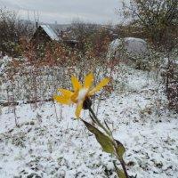 Первый снег :: bemam *