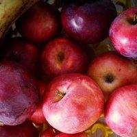 Яблоки :: Ksenia Bahcha