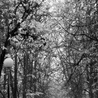 Дождь в парке... :: Копыткина Юлия