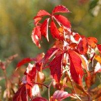 Яркая красота осени :: Lyudmila Petryashina