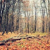 Осенняя поляна :: Miss Taty .
