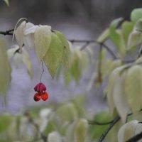В осеннем лесу.Продолжение. :: Андрей Куприянов
