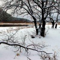 Внезапен первый снегопад... :: Лесо-Вед (Баранов)