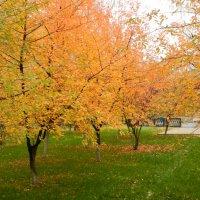 Заглянула осень в сквер... :: Ирина Рачкова
