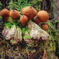 Лесной мир ( грибы-дождевики ) :: марк
