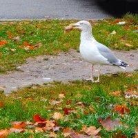 серебристая :: linnud