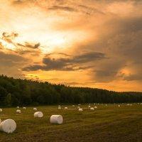 Скошенное поле :: Александр Фатеев