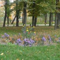 Осень :: Любовь Шатура