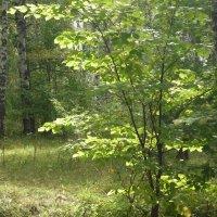 Сентябрь в лесу :: Ольга