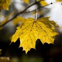 осень :: Надежда Круглова
