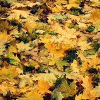 Шуршит ковёр осенних листьев .... :: Елена Швецова