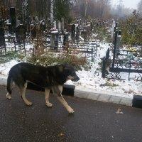 Собака охранник :: Дмитрий Сушкин