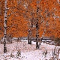 Ложится желтый лист берез на белый снег :: Татьяна Ломтева