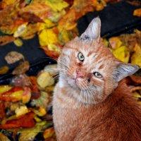 Портрет кота в осеннем интерьере :: Игорь Попов