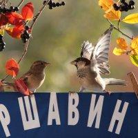 Опять замешан в конфликте Аршавин. :: Вячеслав