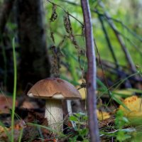 По грибы :: Наталия Евгеньевна