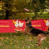 Dog frisbee :: Ольга Сковородникова