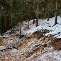 Лесные древесные нервы... :: Лесо-Вед (Баранов)