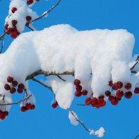 Снежная шапка на яблоне-дичке :: Нина северянка