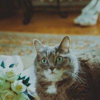 Свадебный котик :: Аделика Райская