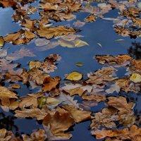 Вода и листва :: Полина Калинкина