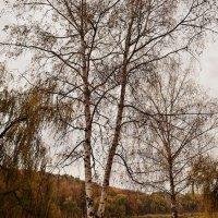 Осень и настроение... :: *MIRA* **