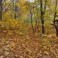 Осенней порой :: Мила Раменская (Забота)