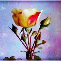 осеняя роза :: Надежда