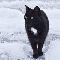 Эмма :: Виталий Городниченко
