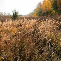 Травы, травы,травы не успели... :: Ирина Сивовол