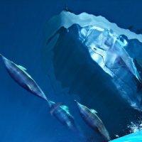 Черноморские дельфины :: Анна Vashhilina