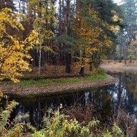 Старый пруд... :: Nikanor