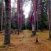 в лесу :: Валентина Папилова
