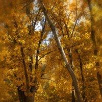Золотая осень :: Denis Aksenov