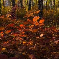Осенний парк в лучах заката :: Лидия Цапко