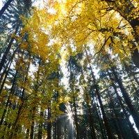 лес :: Dorosia