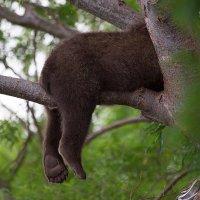 Спящие лапки :: Денис Будьков