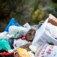 Киприотские коты везде :: Anna Lipatova