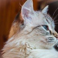 Кошачья серьёзность :: Алексей Масалов