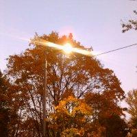 Осенний свет :: gor4inka Koryagina