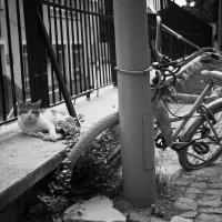 Стамбульский кот-сторож :: Ирина Лепнёва