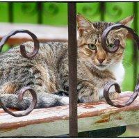 Кот в парке :: Леонид